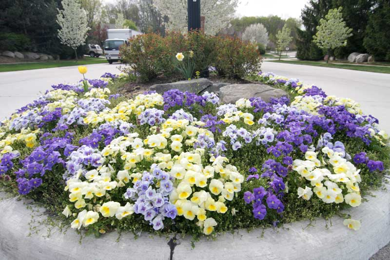 Begonia Brothers Photos of Flower Bed Installation Designs